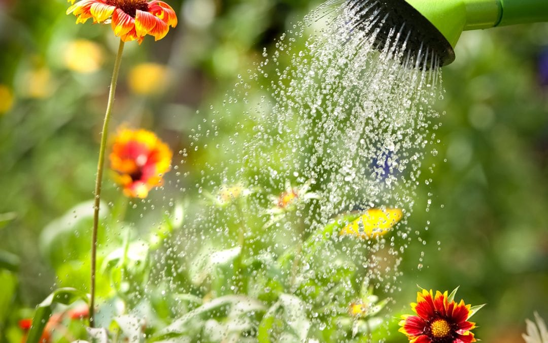3 Ways to Start Saving Water in Summer Months