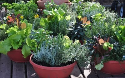 4 Tips For Container Gardening