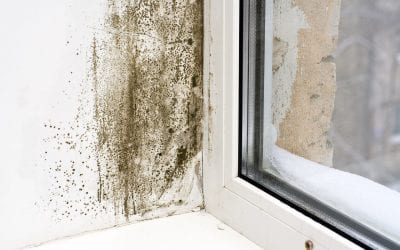 5 Ways to Prevent Mold in the Home